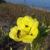 069roberta-venezianioenothera-biennislido-delle-nazioni-fe