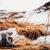 065mirko-schincagliala-meta-vista-da-una-ranaforni-avoltri