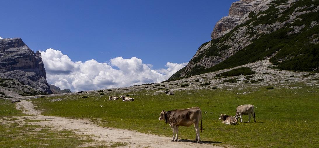 Val Badia – pascoli in quota